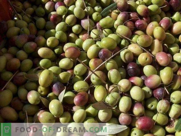 Маслинки или маслинки - каква е разликата и користа?