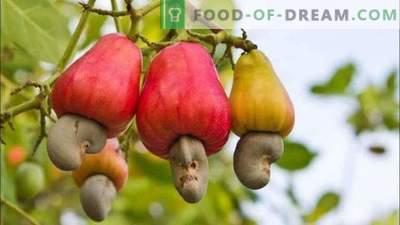 15 плодови што ги јадеме, но не знам како растат