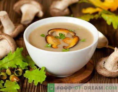 Сос со печурки - најдобри рецепти. Како правилно и да готви печурки сос.