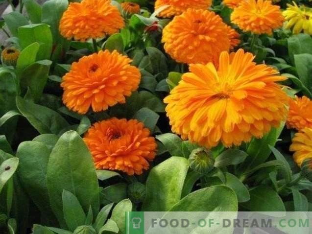 Цвеќе: убава и вкусна