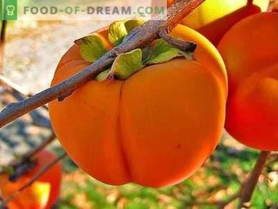 Персиммон - опис, корисни својства, употреба при готвење. Рецепти со persimmon.