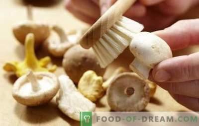 Како да се чисти шампињони: за варење, пржење, маринирање. Дали шампињони чисти пред готвење и зошто?