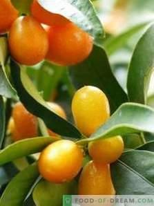 Kumquat: Nutzen und Schaden